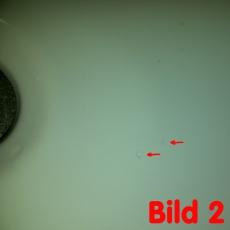 B-Ware LIKOS Designer Muschel Waschbecken zum Schnäppchenpreis